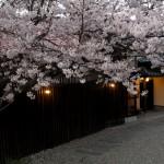sakura-umenoha-s