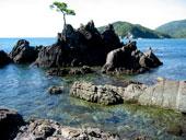 日本海の磯