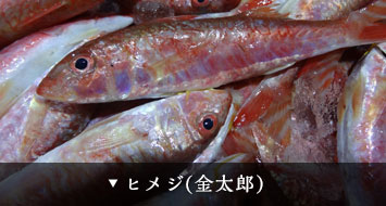 ヒメジ(金太郎)
